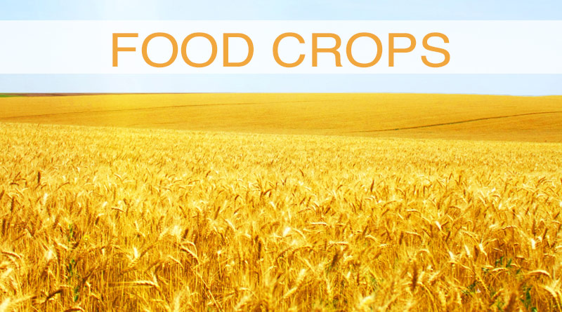 Food Crops - Must Known Teofl Words List